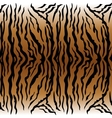 Animal pattern Tiger vector image