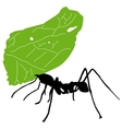 Leaf cutter ant vector image