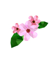 beautiful origami cherry blossom vector image vector image