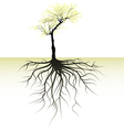 blooming tree with root vector image vector image