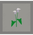 flat shading style flower calla vector image vector image