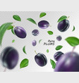 flying blue plums on transparent background vector image