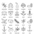 set of herbs and plants outline icons used in vector image vector image