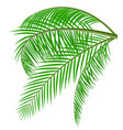 tropical green leaves jungle leaves vector image vector image