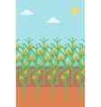 Background of corn field vector image vector image