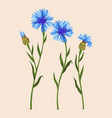 set of cornflowers vector image