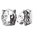 tiger head is shown from its front and side view vector image vector image