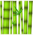 Background - green bamboo stems and twig with vector image vector image