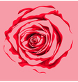 beautiful red rose flower vector image vector image