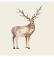 hand drawn deer watercolor style vector image vector image