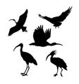 silhouettes of a ibis vector image vector image