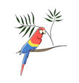 clip art tropical parrot vector image vector image
