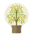 money plant vector image vector image