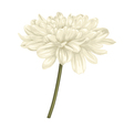 beige dahlia with stem isolated on white vector image vector image