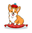 corgi dog with crown vector image vector image