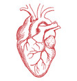 red human heart drawing vector image