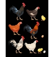 Set of chicken vector image vector image
