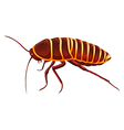 Giant cockroach - Anamesia vector image vector image