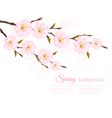 Spring background with a sakura branch vector image