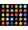 Top view of colorful blooming flowers vector image