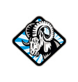 Bighorn Ram Sheep Goat vector image vector image