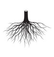black tree roots vector image vector image