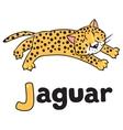Little cheetah or jaguar for ABC Alphabet J vector image