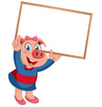 a pig with blank board vector image vector image