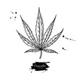 marijuana leaf drawing cannabis botanical vector image