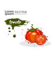 tomato hand drawn watercolor vegetable on white vector image