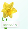 valentine background with jonquil vector image vector image