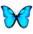 blue butterfly exotic vector image vector image