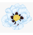 Tree peony white flower isolated vector image vector image