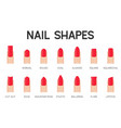 nail shapes for manicure and pedicure icon vector image vector image