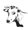 Cow drawing ornament decoration vector image vector image