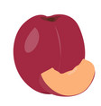 pair of plums vector image vector image