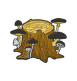 stump with mushrooms sketch vector image vector image