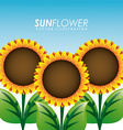 sunflower garden vector image