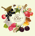 Fruit and berry banner vector image