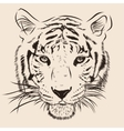 Original artwork tiger with dark stripes isolated