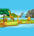 scene with giraffes river vector image vector image