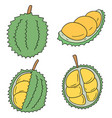set of durian vector image vector image