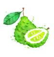 watercolor bergamot fruit