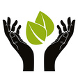 Hands with leaf symbol vector image