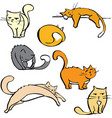 Several Cats vector image vector image