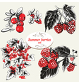 Summer berries vector image