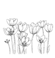 Tulips on a white background vector image vector image