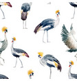 watercolor african crane pattern vector image