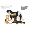 dogs by country of origin bulgarian dog breeds vector image vector image