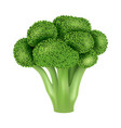 fresh broccoli icon realistic style vector image vector image